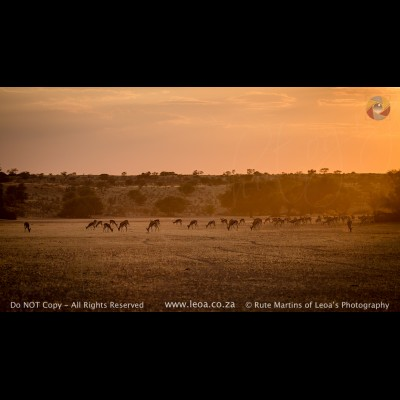 9951 Kgalagadi Landscape
